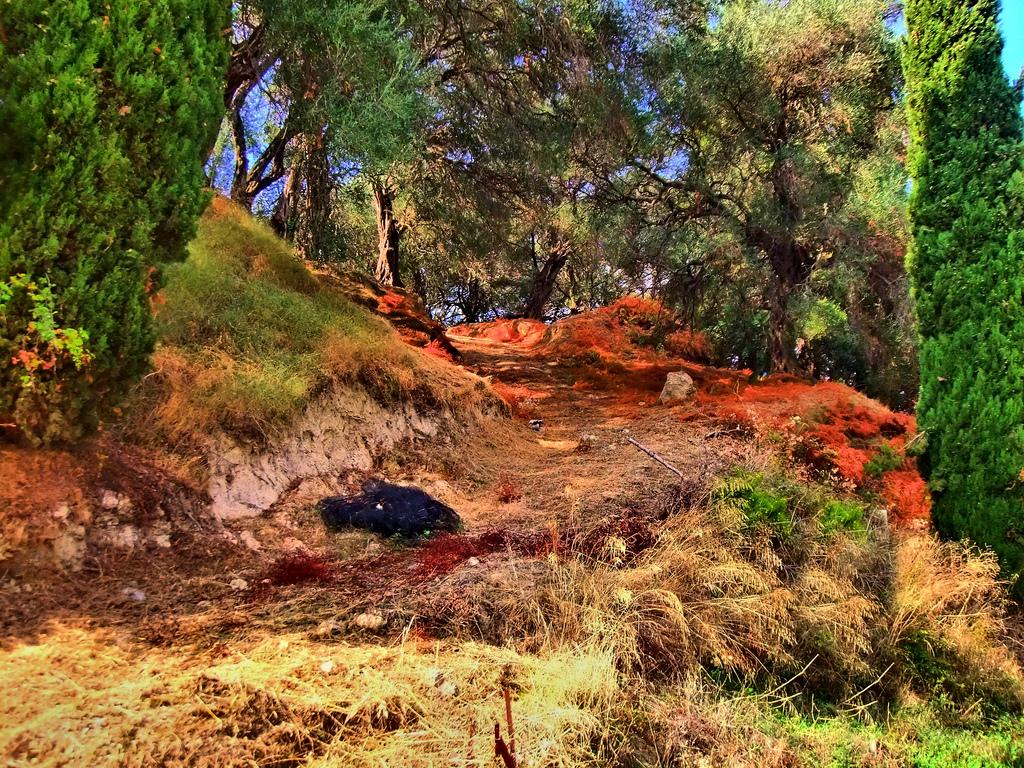 18. Corfú, paraiso de cipreses y olivos. Autor, Keith Laverack
