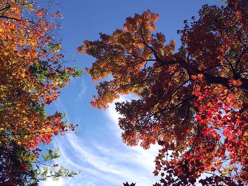 2013_1014Loca-Foliage0002 by maineman152 (Lou)