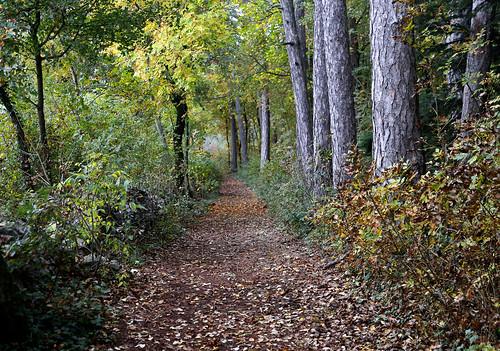 alberi autunno bosco