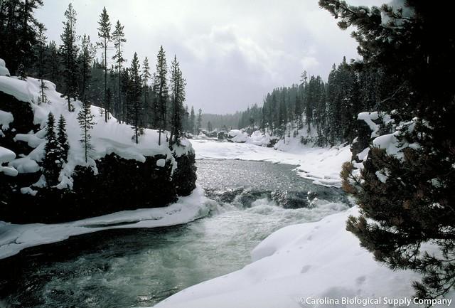 Yellowstone River in winter