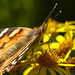 Painted lady by smiley117/ mary.....off for a while