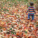 Autumnal exploration by revolvingdork