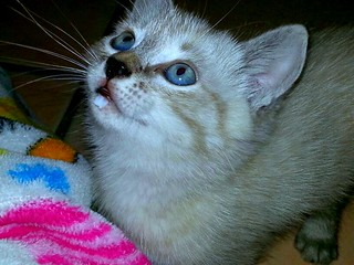 THE SWEET KITTEN OF MY NIECE :)