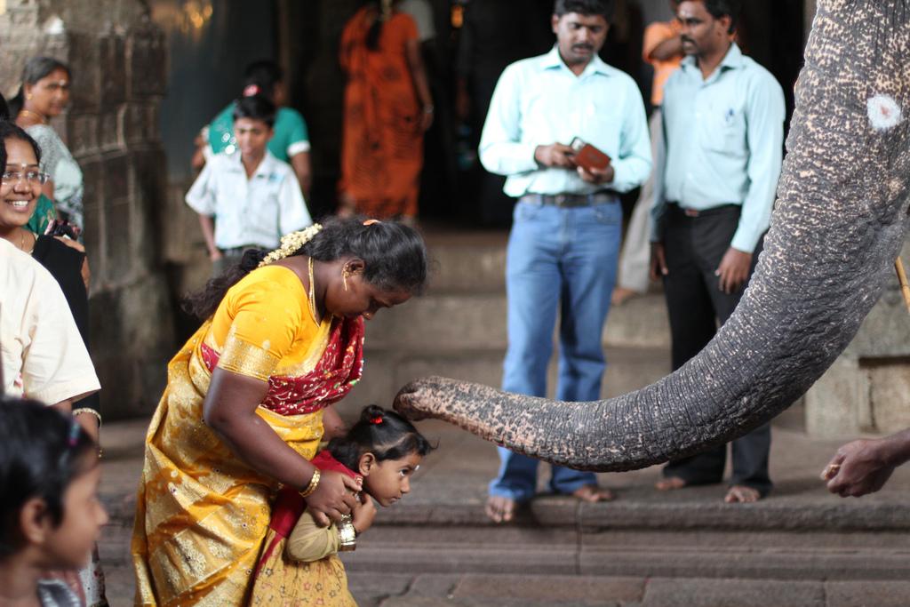 8. La bendición del elefante. Autor, Mrbichel