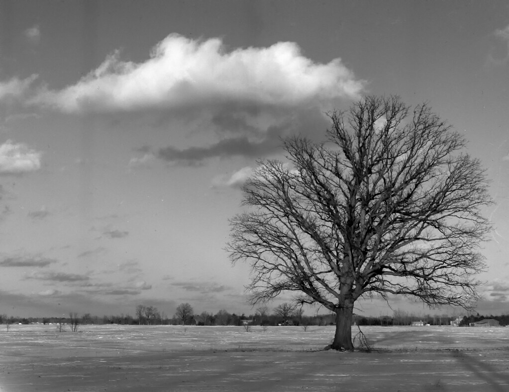 52:320TXP - Week 05 - The Lone Tree
