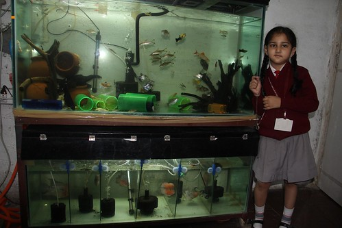 Marziya Shakirs Fish Tanks by firoze shakir photographerno1