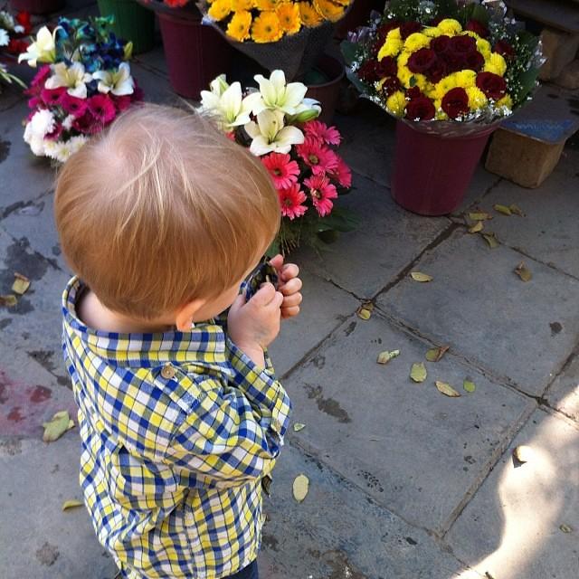 Contemplating his options #nofilter #flowerwallah #delhi #india