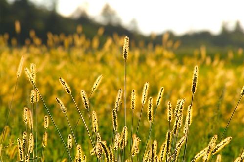 Meadow glow