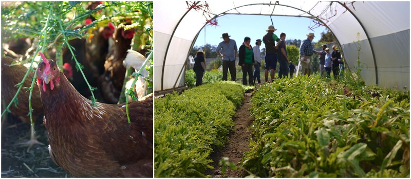 Attractive Dive Straight Into The Nuts And Bolts Of How To Run A Thriving, Diverse  Organic Market Garden, Taught By Long Term, Established And Successful  Market ...