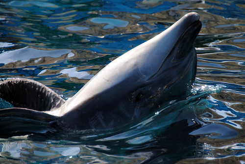 Nagoya Aquarium 089r