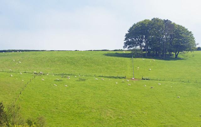 The Hillside, South Devon