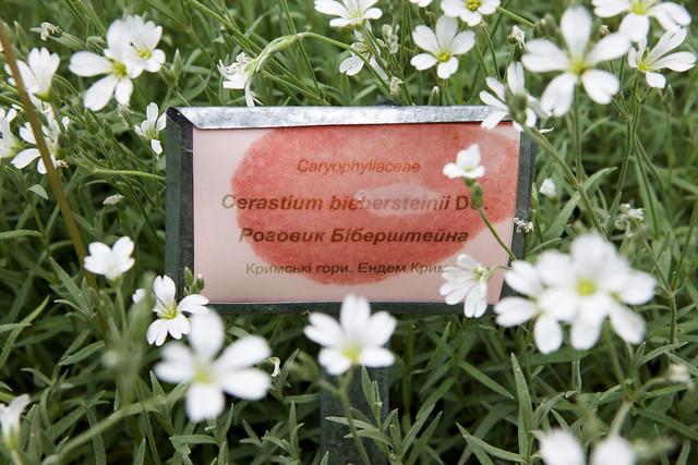 white wild flower. Botanical garden. Lviv, Ukraine