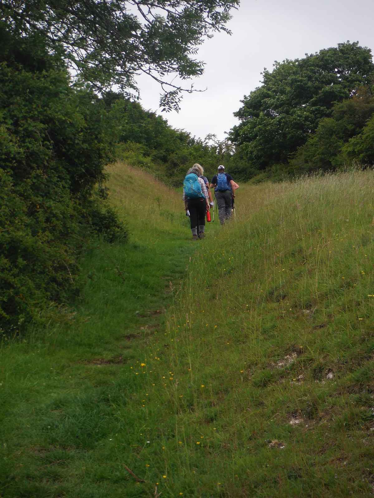 steep grassy path between earth banks SWC Walk 239 Halnaker to Chichester via Cass Sculpture Park and Goodwood