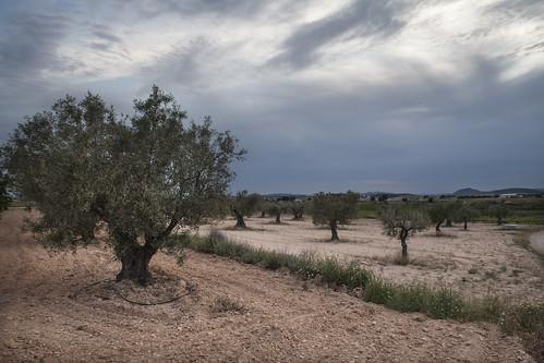 Albatana (Albacete)