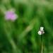 Spring Green by Kim Jane