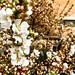 이제 벚꽃도 슬슬 피는구나 Sakura is bursting into bloom.   #벚꽃 #cherryblossom #sakura #桜 #iphone #nature #자연