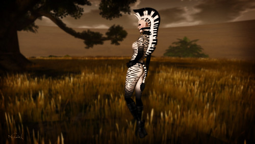 Graves - Wildlife - Zebra