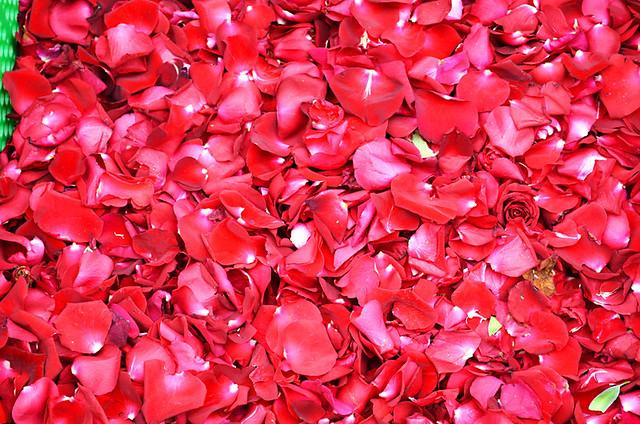 Petals, Corpus Christi, Flower Carpets, La Orotava, Tenerife