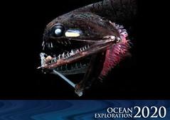 Ocean Exploration 2020: Deep-sea Fish