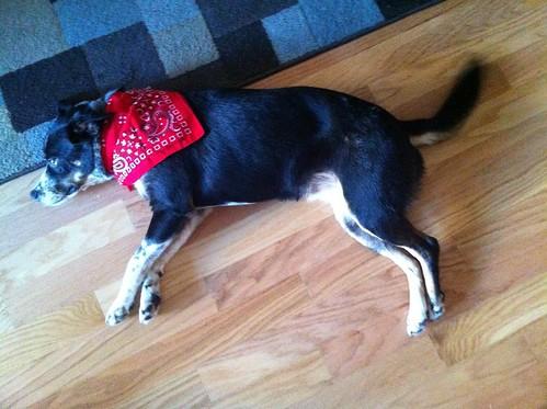 A dog named ruby