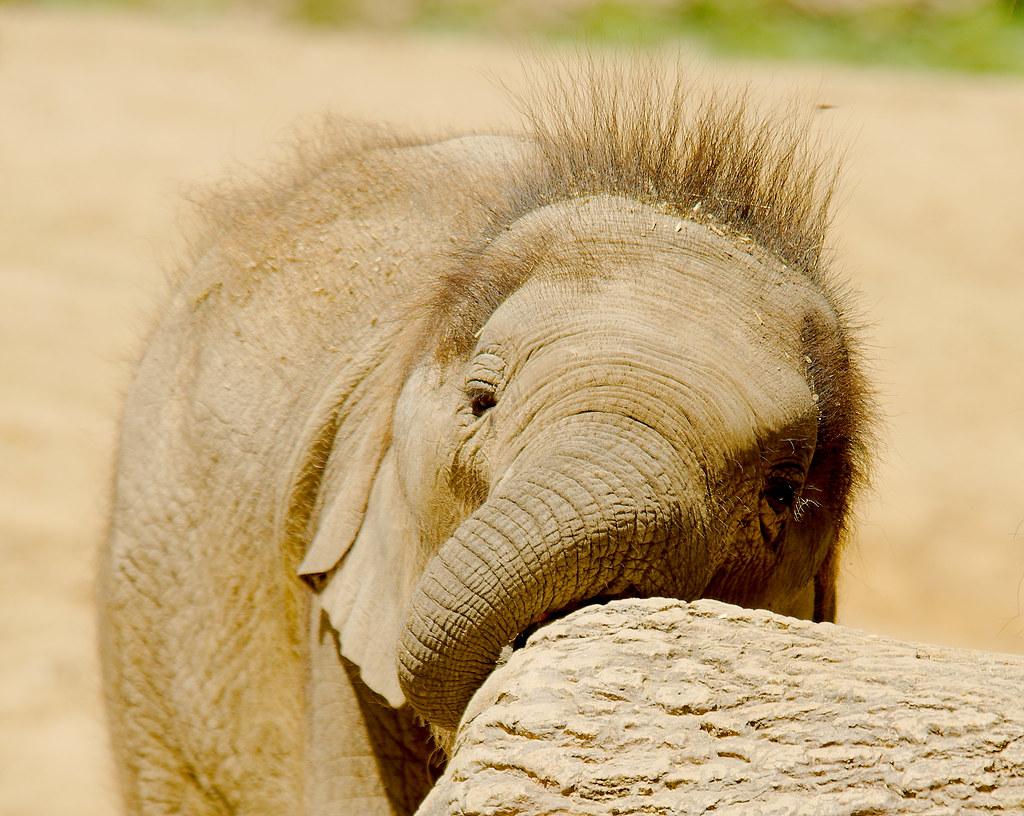 Elephant_90