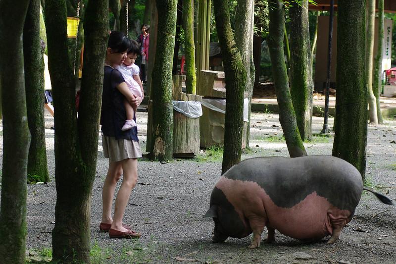 南元農場的動物們