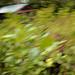 Small photo of Backyard Greenery