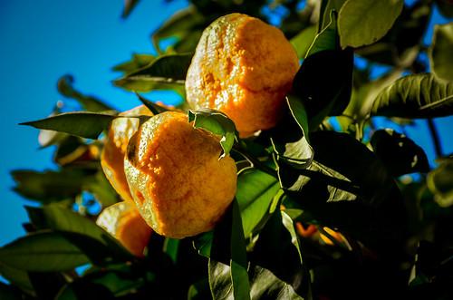 Naranjas 4