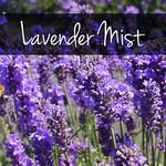 closeup lavender