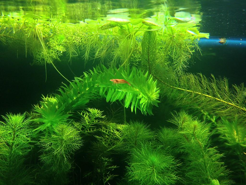 how to make a shrimp tank