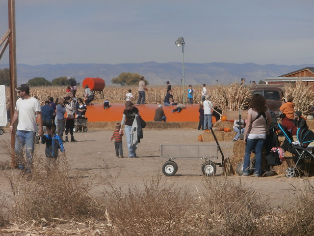 Colorado Halloween Activities - Studt's Pumpkin Patch Bouncing Surface