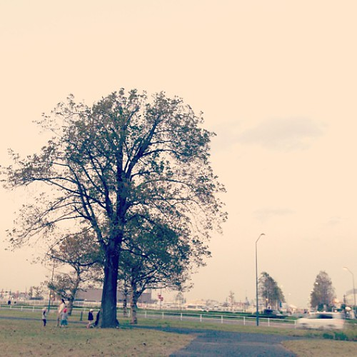 #tree #yokohama