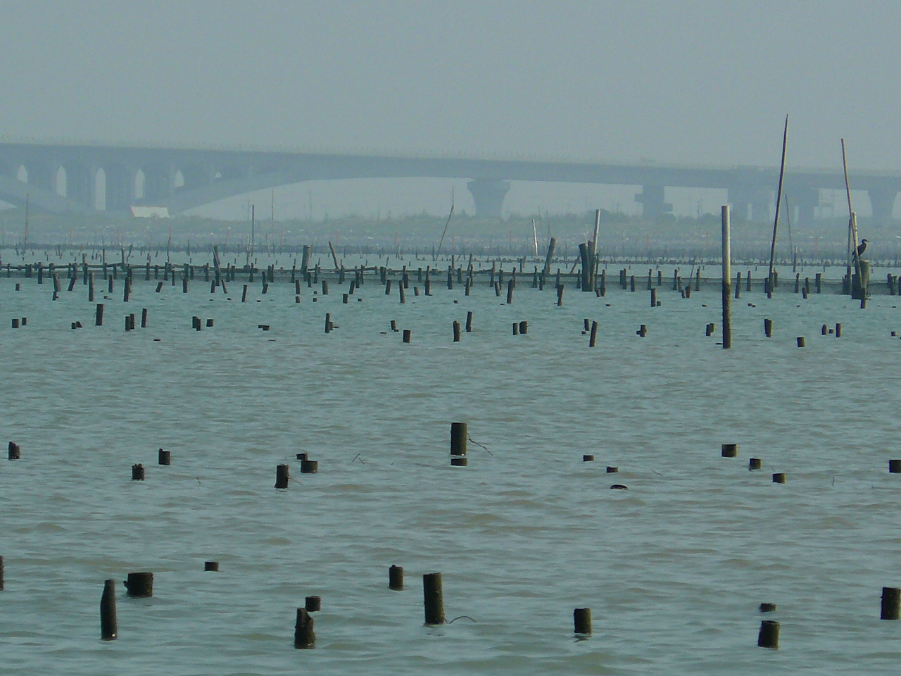 遠眺七股潟湖(照片提供:台南市生態保育學會)