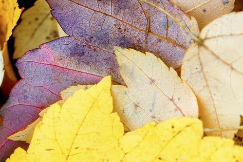 11-13 fall-9540-Edit-23