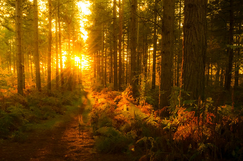 sunset sky sun sunlight lake landscape scenic nottinghamshire nikon1855mmlens nikond5100