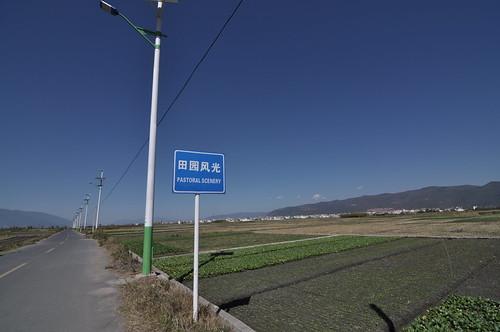 DSC_8786