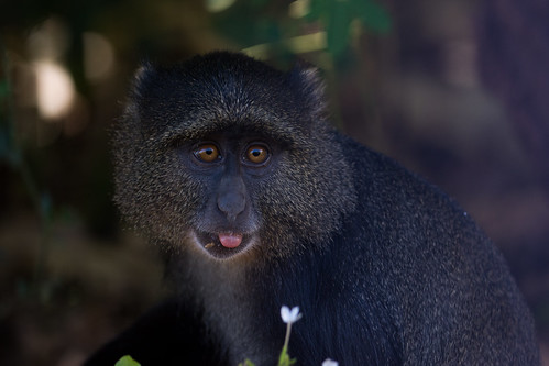 park blue lake tongue tanzania monkey national manyara