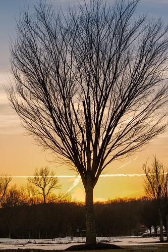 winter sunset snow tree silhouette newjersey twilight unitedstates sundown branches hdr holmdel barrentree