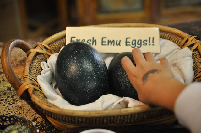 fresh emu eggs