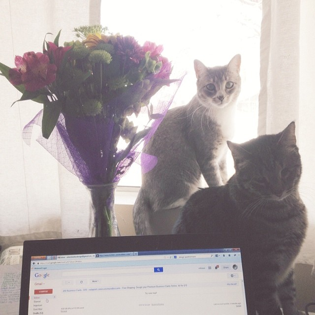 Kitties, flowers and empty inboxes. These are a few of my favorite things ❤️