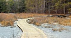 Beaver Dam Trail (9)