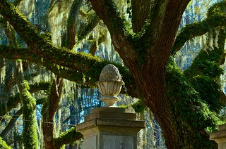 Resurrection Fern and Spanish Moss - Wormsloe Plantation - Savannah GA