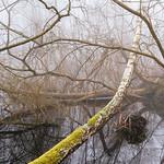Swamp-Tangle