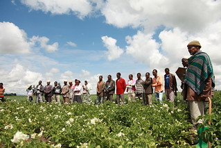 Stakeholders and farmers on potato demonstration field