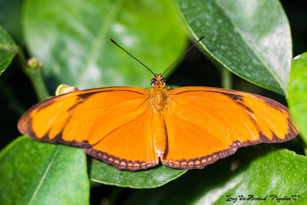 Papillons  13643659175_dbda3be268_b