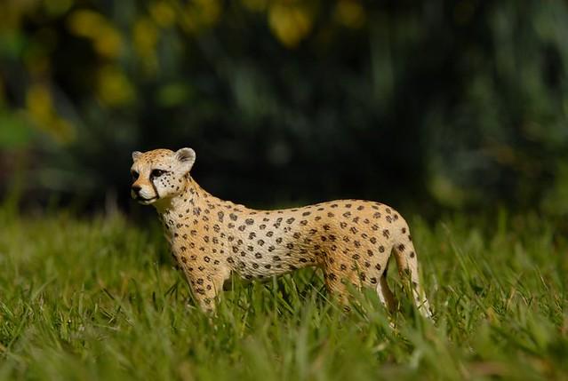 Schleich female cheetah 14614  13879979545_b7dcfb74e3_z