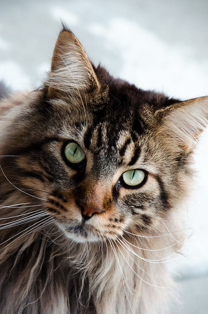 cheshire cat images