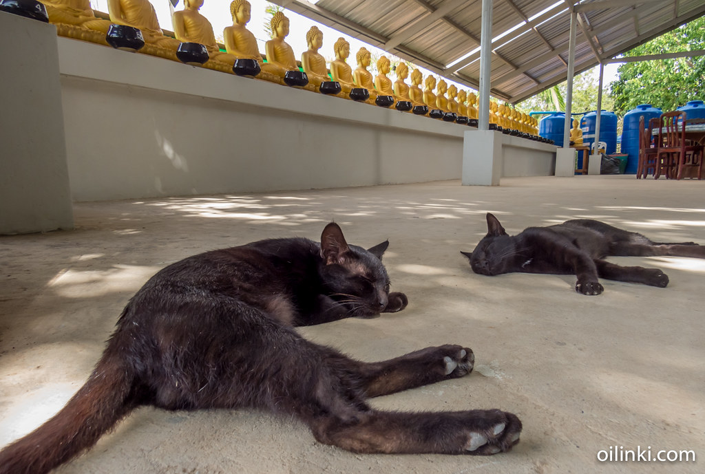 Sleepy cats at Big buddha of Phuket