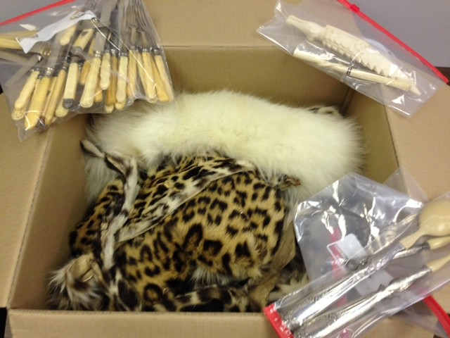 Leopard and Ivory Seized from Commercial Air Cargo Shipment in New Orleans