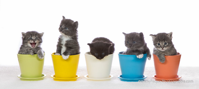 Kitten in pots